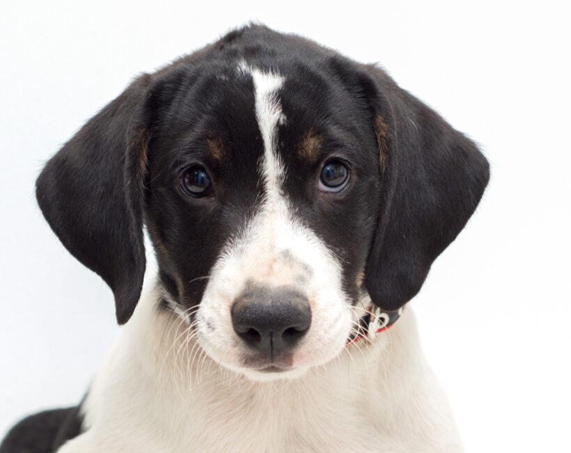 Payton-Adopted!