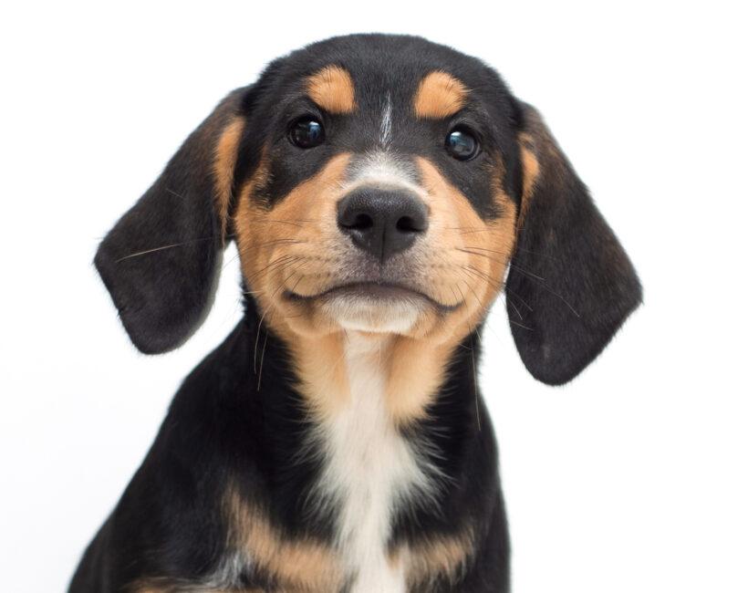 Petra-Adopted!