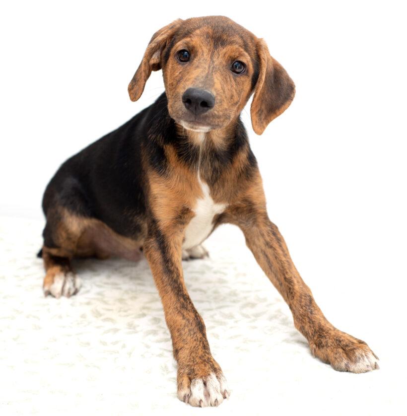 Presley-Adopted