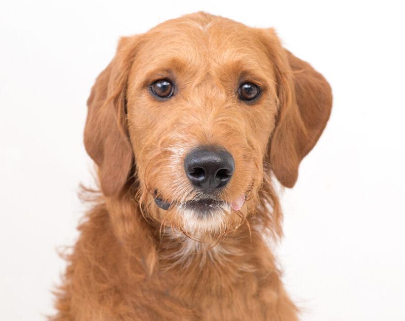 Ruben-Adopted!