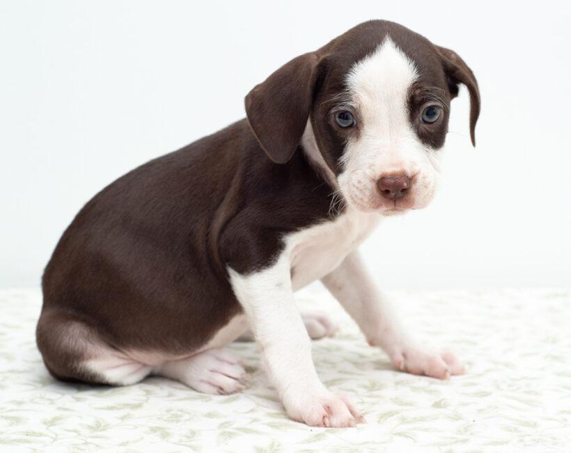 Oreo-Adopted!